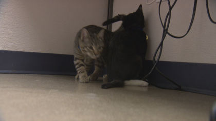 dfl expansion 10pkg transfer frame 418 $40M Worth Of Changes Coming To Colorado Animal Shelter
