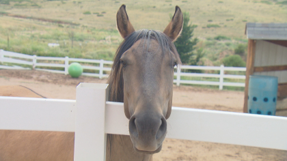 zumas rescue 3 Rescue Ranch Saves Horses, Horses Save People