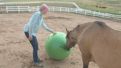 zumas rescue 4 Rescue Ranch Saves Horses, Horses Save People