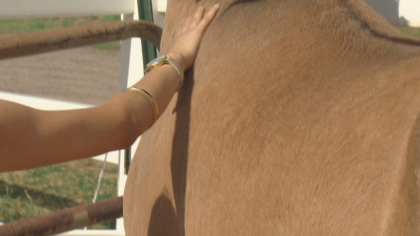 zumas rescue 6 Rescue Ranch Saves Horses, Horses Save People