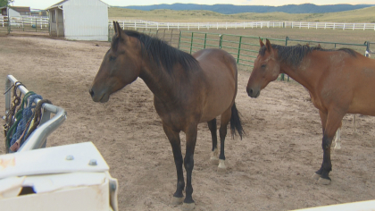 zumas rescue 8 Rescue Ranch Saves Horses, Horses Save People