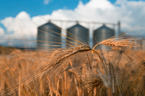Overstock's Medici Invests $2.5 Million in Grain Tech Firm's Blockchain Pivot